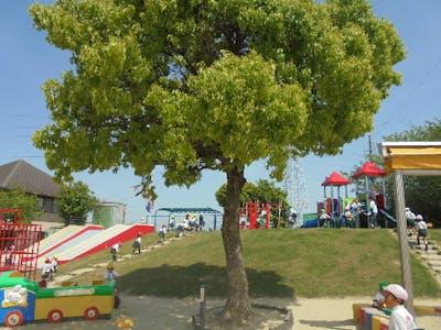 つばさ幼稚園の画像・写真